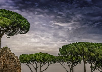 Trees on the site of the Palatine Hill in Rome Italy.